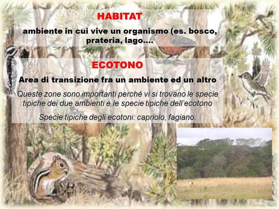 HABITAT ambiente in cui vive un organismo (es. bosco, prateria, lago…. ECOTONO Area di transizione fra un ambiente ed un altro Queste zone sono import