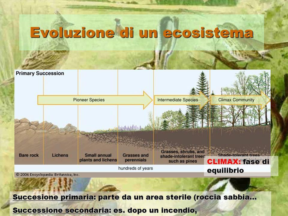 Evoluzione di un ecosistema CLIMAX: fase di equilibrio Succesione primaria: parte da un area sterile (roccia sabbia… Successione secondaria: es. dopo