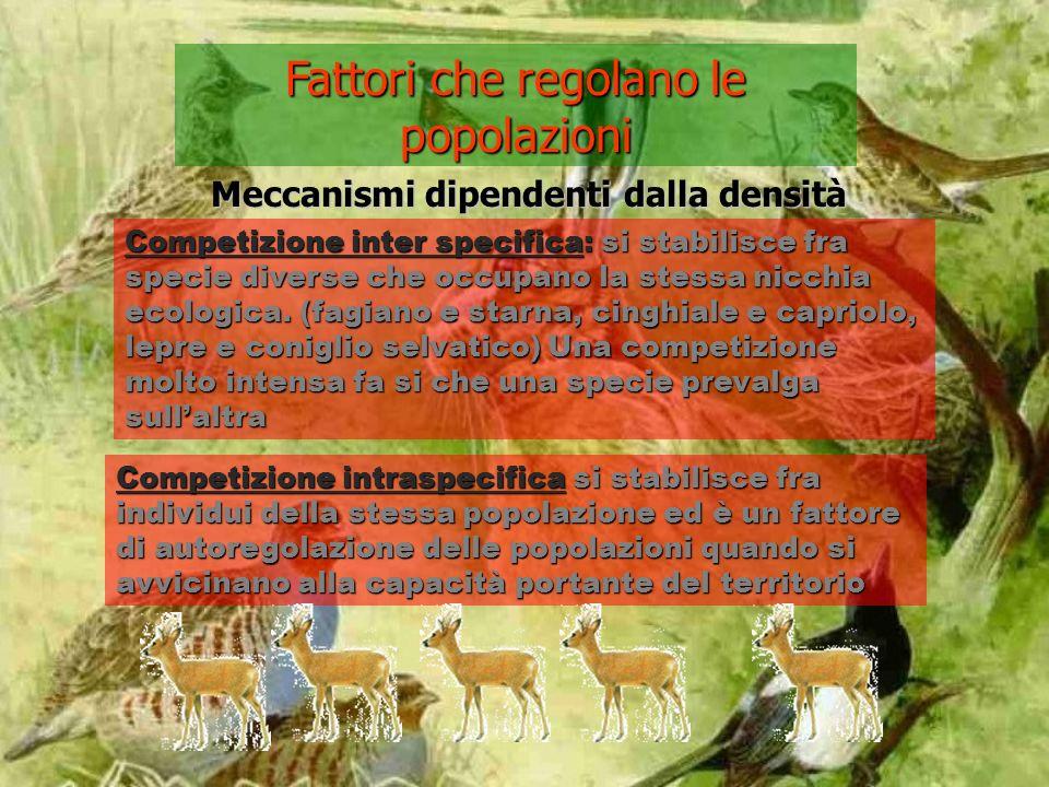 Fattori che regolano le popolazioni Competizione inter specifica: si stabilisce fra specie diverse che occupano la stessa nicchia ecologica.