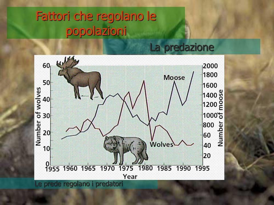 Fattori che regolano le popolazioni La predazione Le prede regolano i predatori