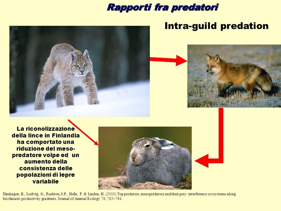 Rapporti fra predatori Intra-guild predation Elmhagen, B., Ludwig, G., Rushton, S.P., Helle, P. & Linden, H. (2010) Top predators, mesopredators and t