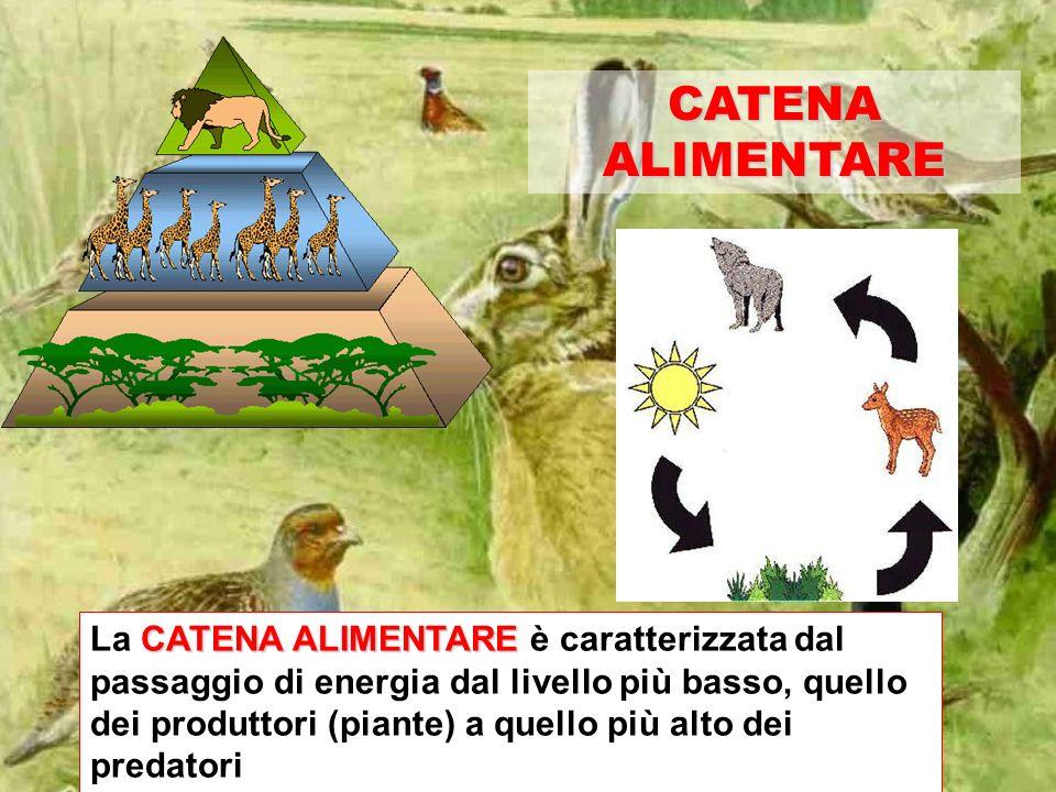 CATENA ALIMENTARE CATENA ALIMENTARE La CATENA ALIMENTARE è caratterizzata dal passaggio di energia dal livello più basso, quello dei produttori (piante) a quello più alto dei predatori
