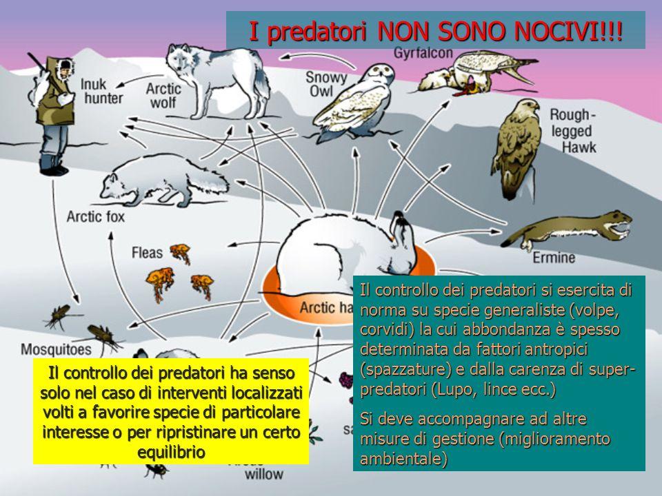 I predatori NON SONO NOCIVI!!! Il controllo dei predatori ha senso solo nel caso di interventi localizzati volti a favorire specie di particolare inte