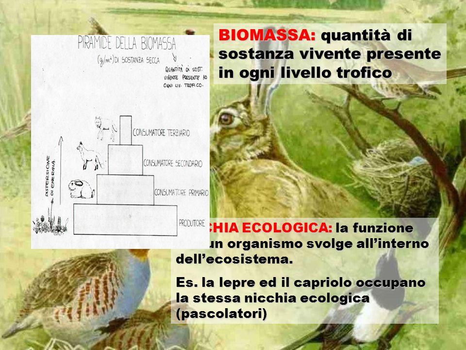 BIOMASSA: quantità di sostanza vivente presente in ogni livello trofico NICCHIA ECOLOGICA: la funzione che un organismo svolge allinterno dellecosistema.