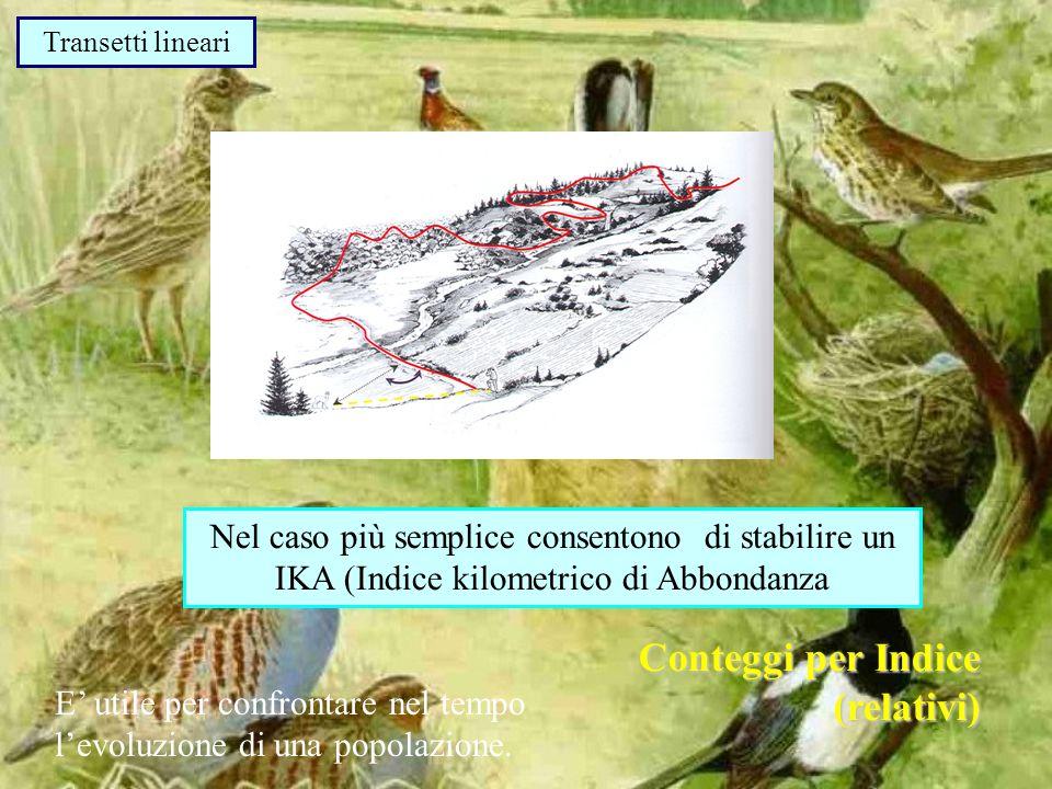 Transetti lineari Nel caso più semplice consentono di stabilire un IKA (Indice kilometrico di Abbondanza Conteggi per Indice (relativi) E utile per confrontare nel tempo levoluzione di una popolazione.