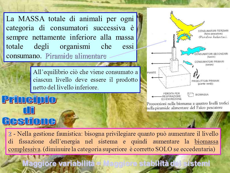 Piramide alimentare La MASSA totale di animali per ogni categoria di consumatori successiva è sempre nettamente inferiore alla massa totale degli orga