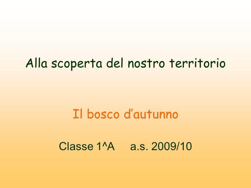Alla scoperta del nostro territorio Il bosco dautunno Classe 1^A a.s. 2009/10