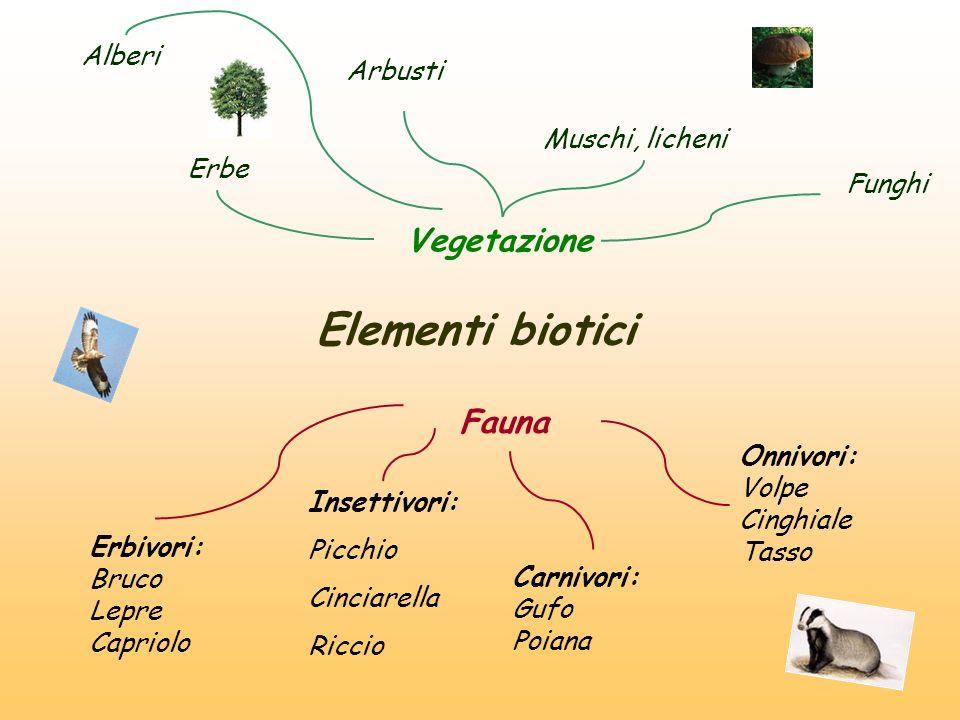 Elementi biotici Vegetazione Alberi Arbusti Erbe Muschi, licheni Funghi Fauna Erbivori: Bruco Lepre Capriolo Insettivori: Picchio Cinciarella Riccio C