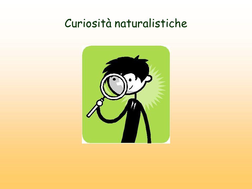 Curiosità naturalistiche
