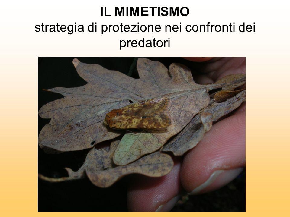 IL MIMETISMO strategia di protezione nei confronti dei predatori
