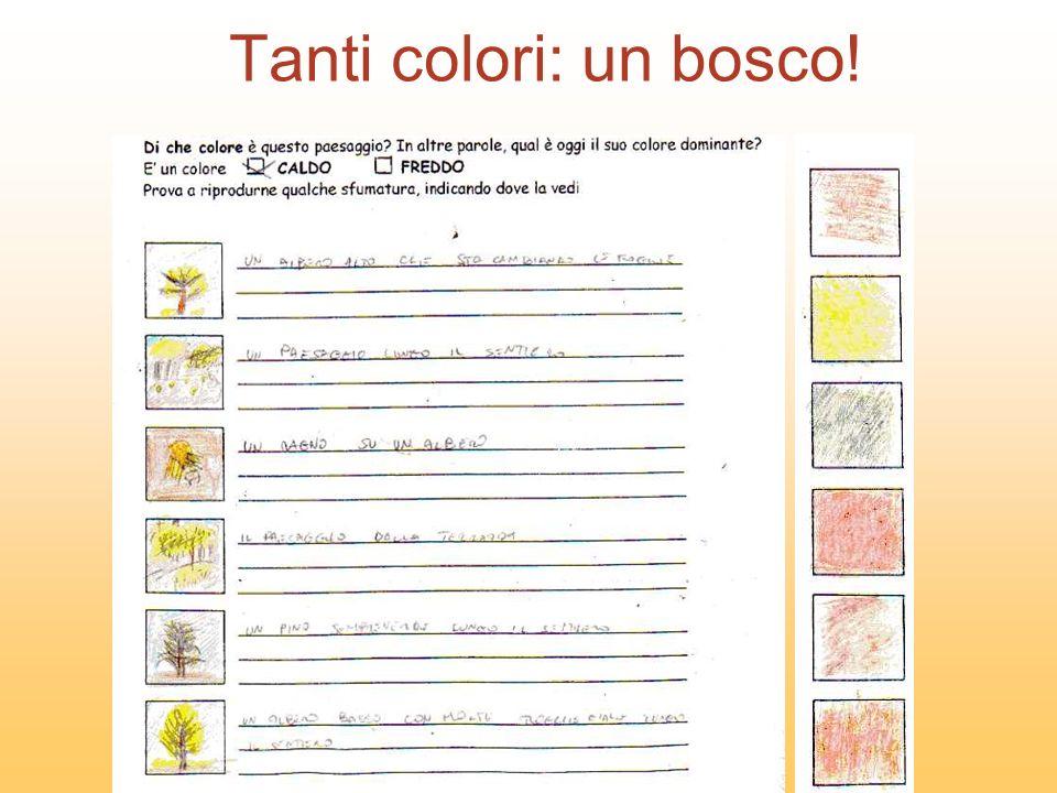 Tanti colori: un bosco!