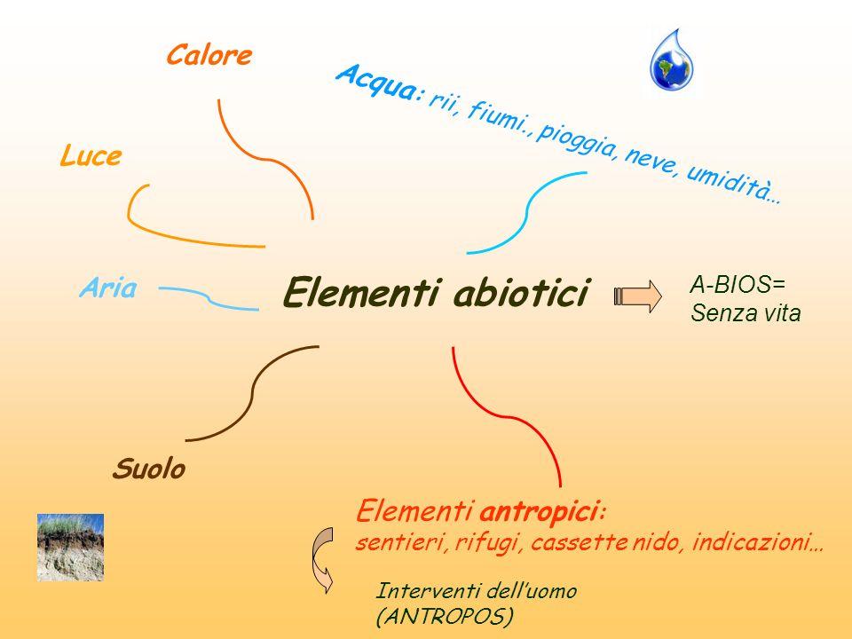 Elementi abiotici Suolo Acqua : rii, fiumi., pioggia, neve, umidità… Luce Aria Calore Elementi antropici : sentieri, rifugi, cassette nido, indicazion