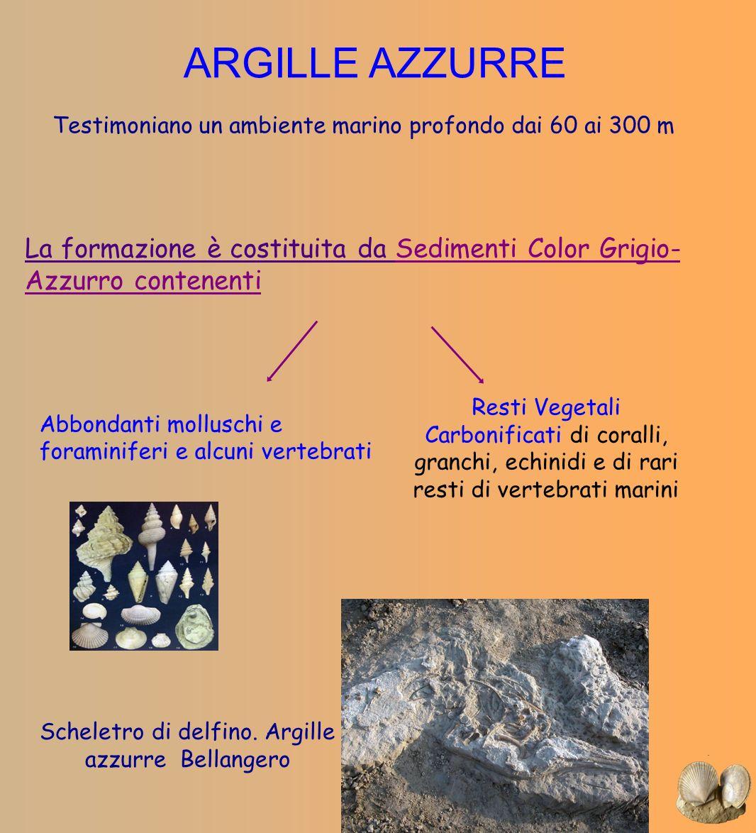 ARGILLE AZZURRE Testimoniano un ambiente marino profondo dai 60 ai 300 m La formazione è costituita da Sedimenti Color Grigio- Azzurro contenenti Rest