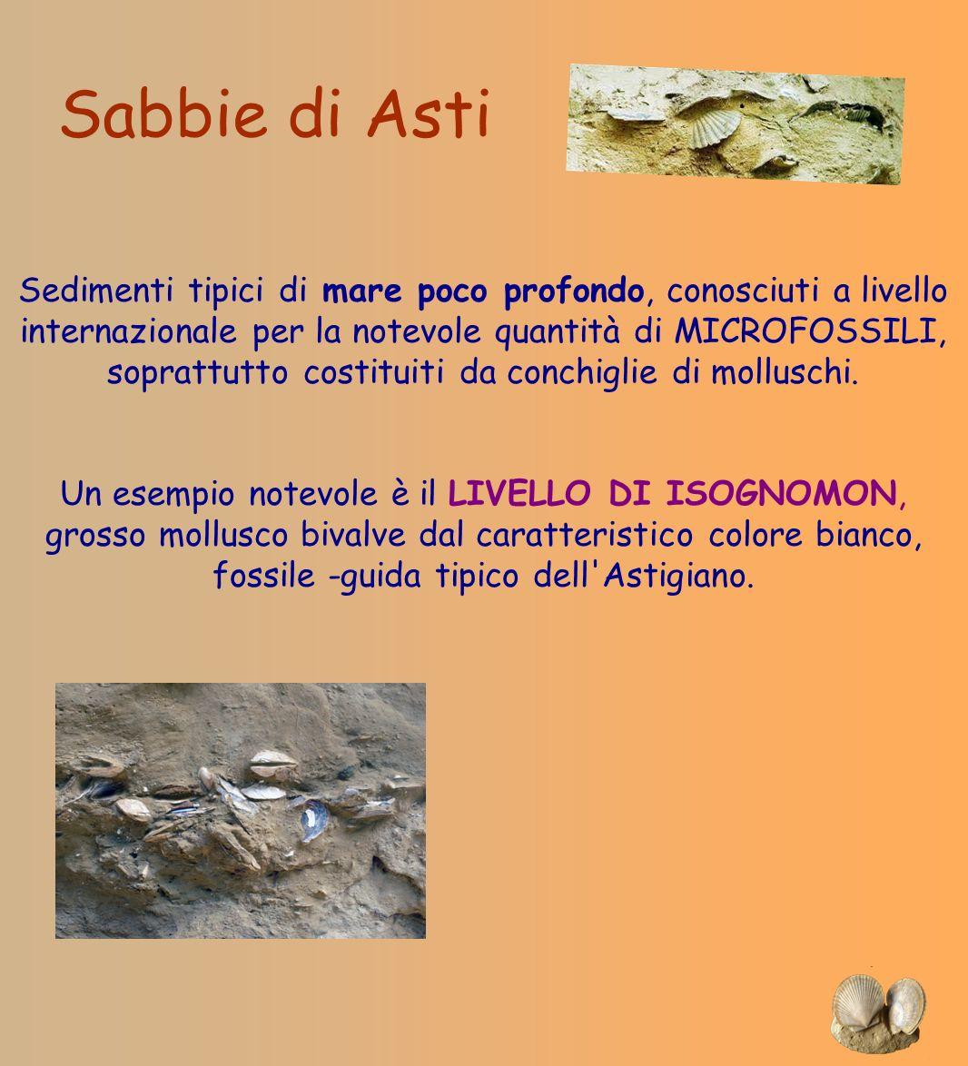 Sabbie di Asti Sedimenti tipici di mare poco profondo, conosciuti a livello internazionale per la notevole quantità di MICROFOSSILI, soprattutto costi