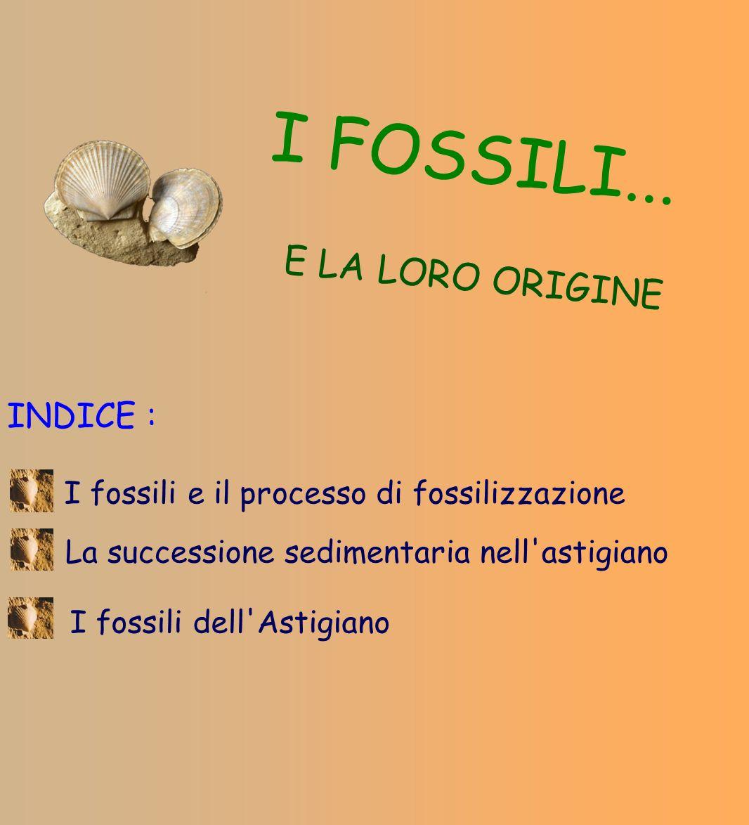 I FOSSILI... E LA LORO ORIGINE INDICE : I fossili e il processo di fossilizzazione I fossili dell'Astigiano La successione sedimentaria nell'astigiano