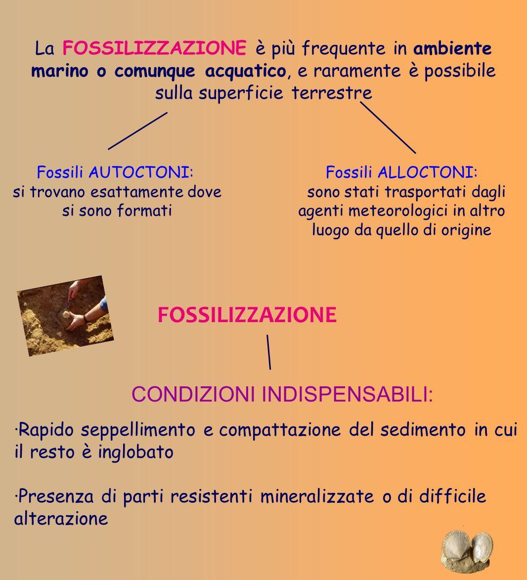 La FOSSILIZZAZIONE è più frequente in ambiente marino o comunque acquatico, e raramente è possibile sulla superficie terrestre Fossili AUTOCTONI: si t