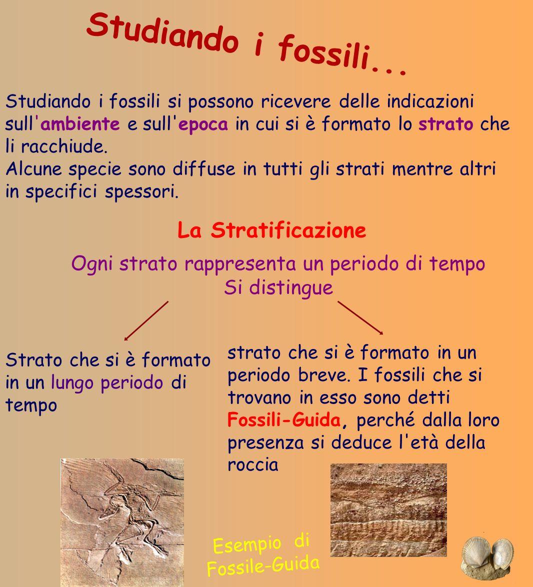 Studiando i fossili si possono ricevere delle indicazioni sull'ambiente e sull'epoca in cui si è formato lo strato che li racchiude. Alcune specie son
