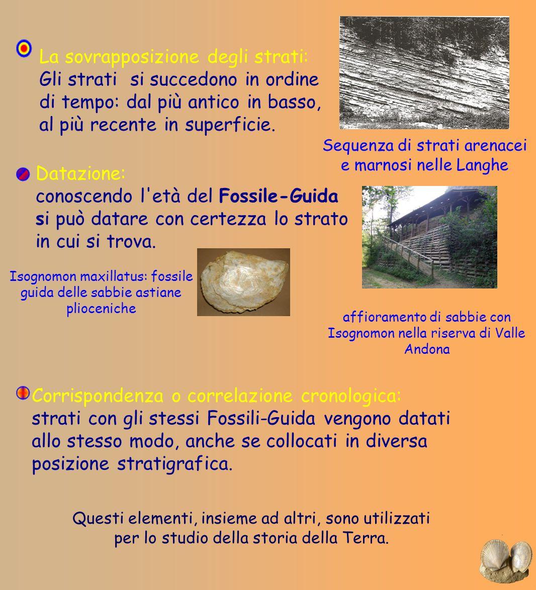 Datazione: conoscendo l'età del Fossile-Guida si può datare con certezza lo strato in cui si trova. Corrispondenza o correlazione cronologica: strati