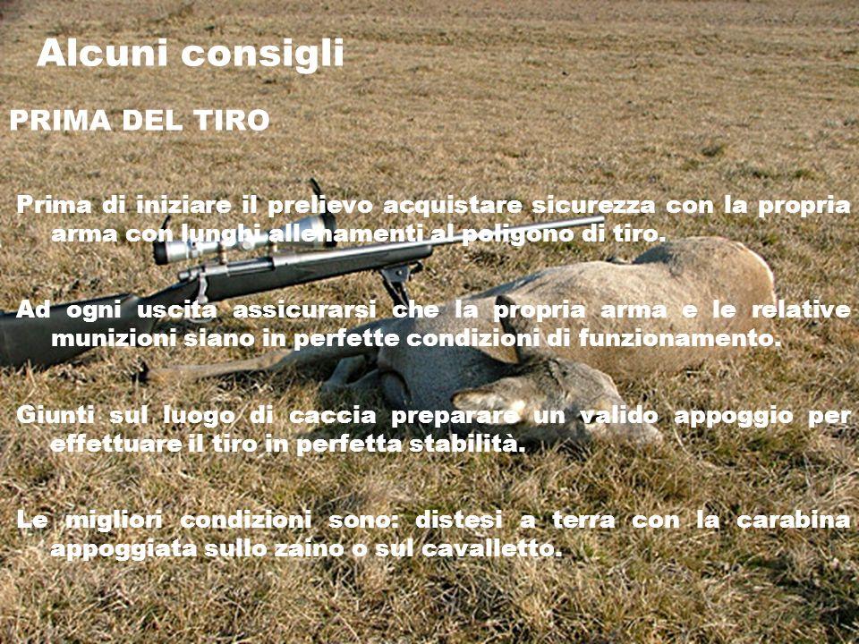 Alcuni consigli PRIMA DEL TIRO Prima di iniziare il prelievo acquistare sicurezza con la propria arma con lunghi allenamenti al poligono di tiro.