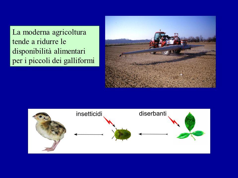 La moderna agricoltura tende a ridurre le disponibilità alimentari per i piccoli dei galliformi