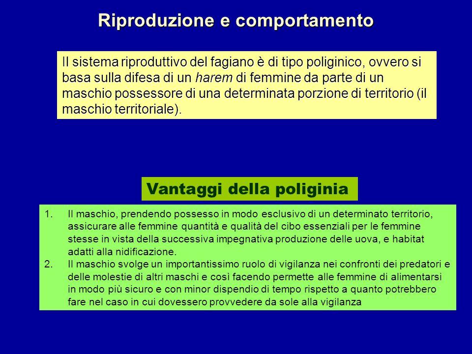 Riproduzione e comportamento Vantaggi della poliginia Il sistema riproduttivo del fagiano è di tipo poliginico, ovvero si basa sulla difesa di un hare
