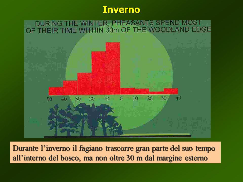 Inverno Durante linverno il fagiano trascorre gran parte del suo tempo allinterno del bosco, ma non oltre 30 m dal margine esterno