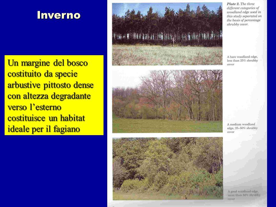 Inverno Un margine del bosco costituito da specie arbustive pittosto dense con altezza degradante verso lesterno costituisce un habitat ideale per il
