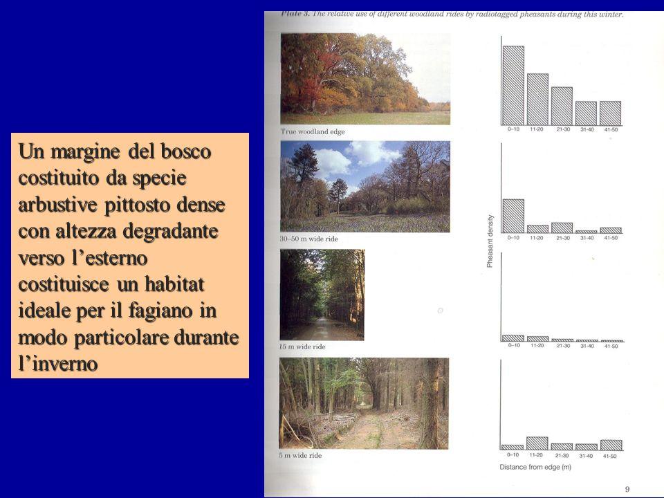 Un margine del bosco costituito da specie arbustive pittosto dense con altezza degradante verso lesterno costituisce un habitat ideale per il fagiano