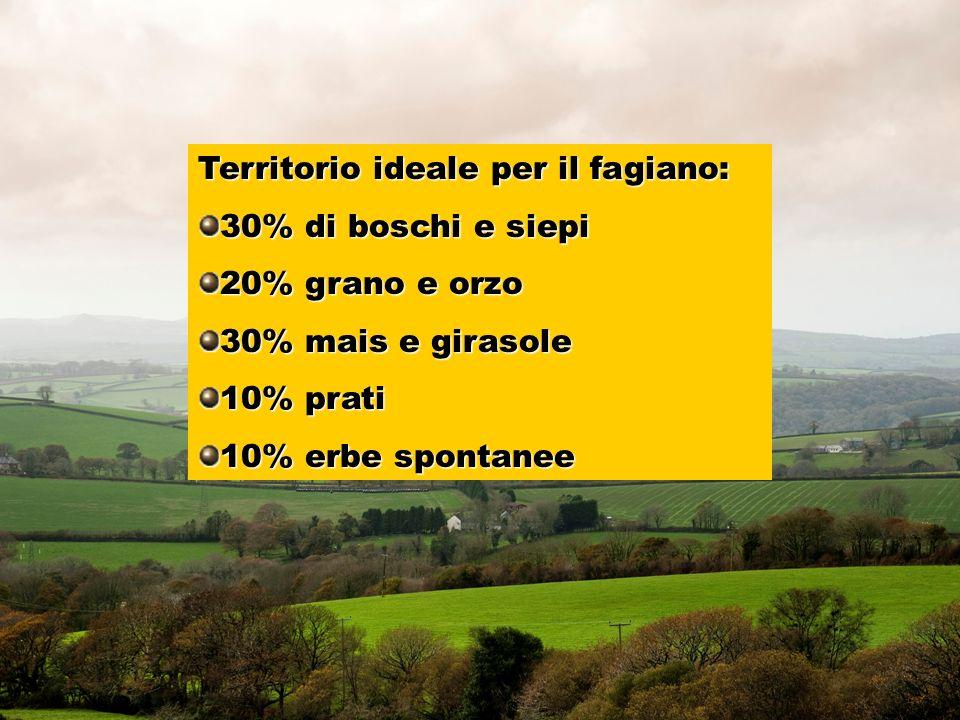 Territorio ideale per il fagiano: 30% di boschi e siepi 20% grano e orzo 30% mais e girasole 10% prati 10% erbe spontanee