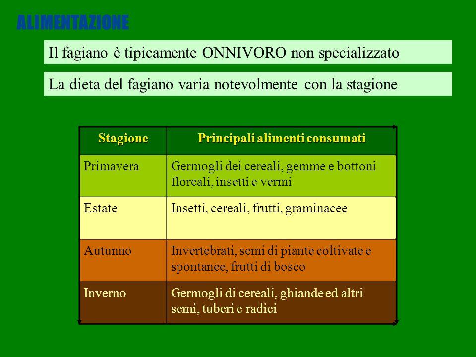 La dieta del fagiano varia notevolmente con la stagione Il fagiano è tipicamente ONNIVORO non specializzato ALIMENTAZIONE Stagione Principali alimenti