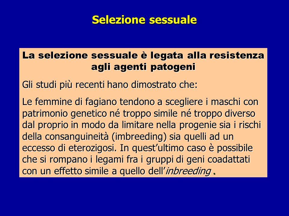 Selezione sessuale La selezione sessuale è legata alla resistenza agli agenti patogeni Gli studi più recenti hano dimostrato che: Le femmine di fagian