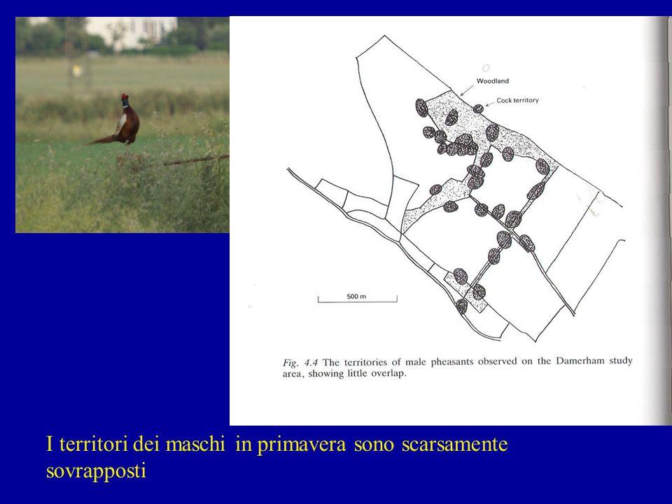 I maschi tendono a stabilire i propri territori primaverili lungo i margini dei boschi Il massimo della densità si raggiunge con una percentuale di bosco compresa fra il 10 ed il 30%