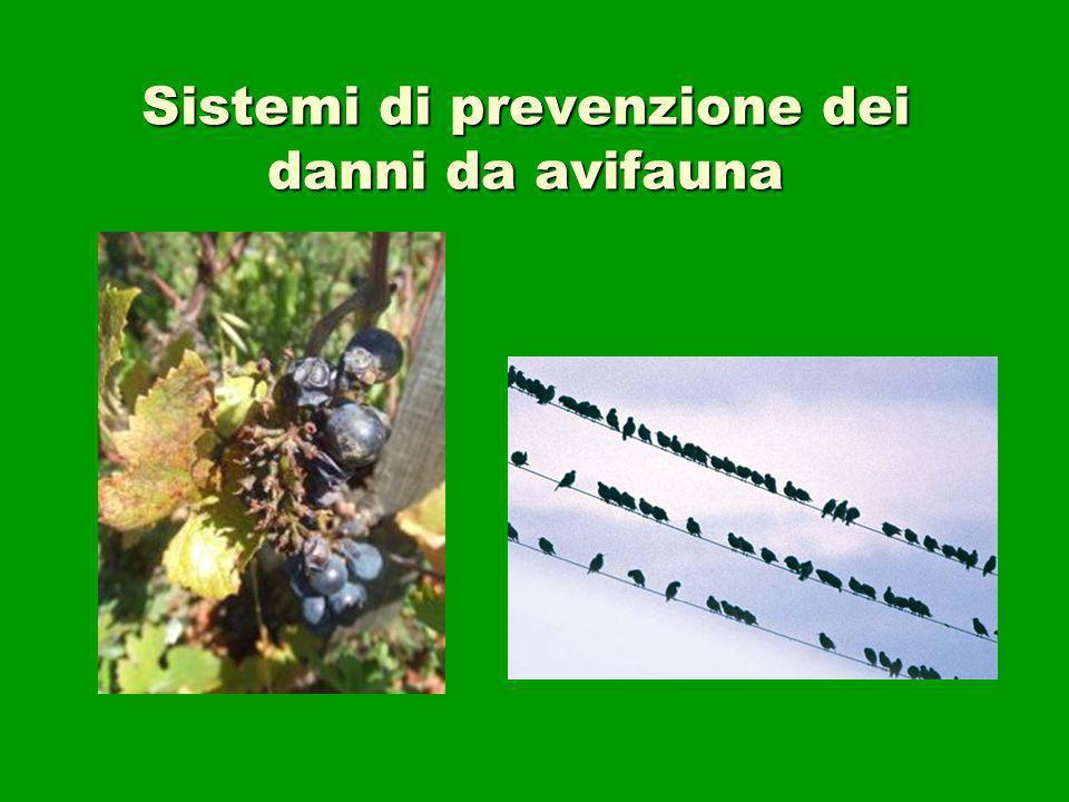 Sistemi di prevenzione dei danni da avifauna