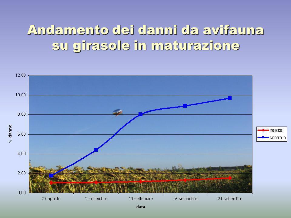 Andamento dei danni da avifauna su girasole in maturazione