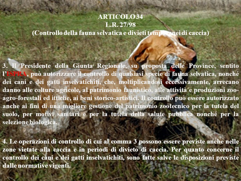 ARTICOLO 34 L.R. 27/98 (Controllo della fauna selvatica e divieti temporanei di caccia) 3. Il Presidente della Giunta Regionale, su proposta delle Pro