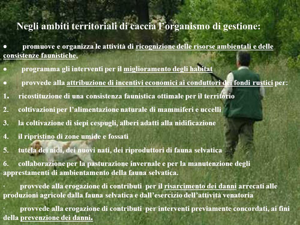 Negli ambiti territoriali di caccia lorganismo di gestione: promuove e organizza le attività di ricognizione delle risorse ambientali e delle consiste