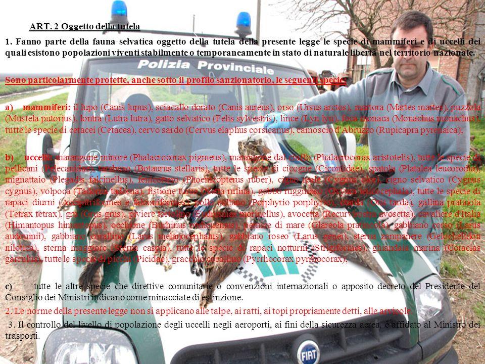 ART. 2 Oggetto della tutela 1. Fanno parte della fauna selvatica oggetto della tutela della presente legge le specie di mammiferi e di uccelli dei qua
