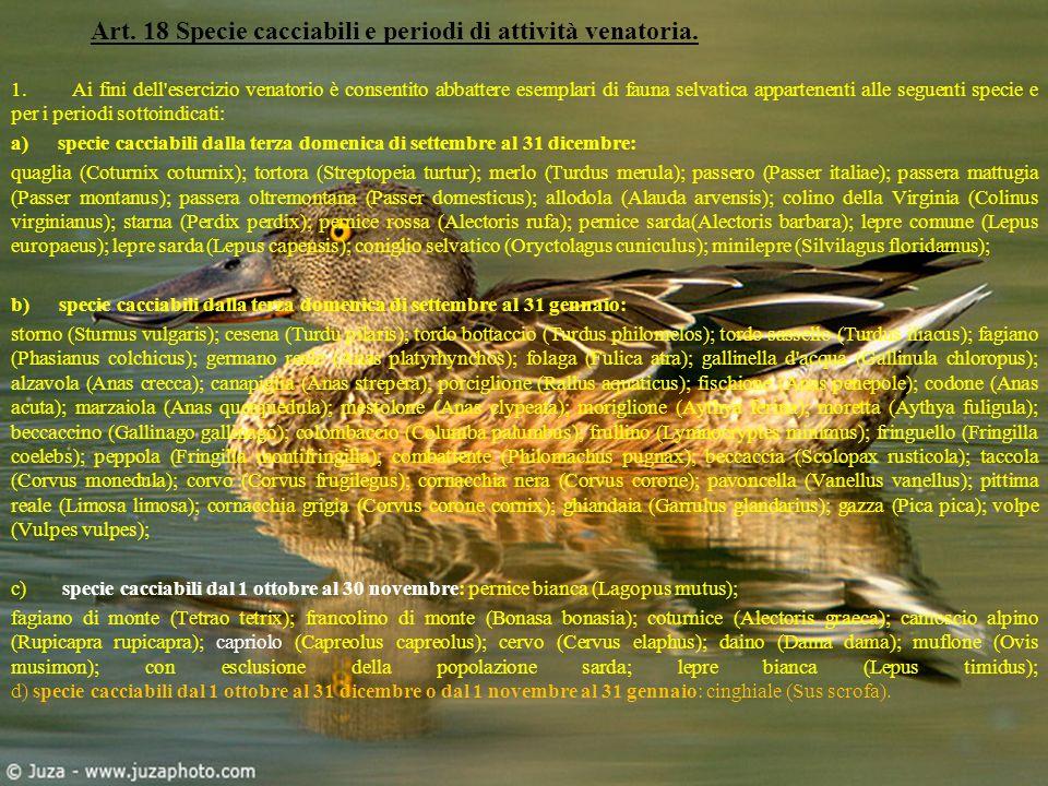 Art. 18 Specie cacciabili e periodi di attività venatoria. 1. Ai fini dell'esercizio venatorio è consentito abbattere esemplari di fauna selvatica app