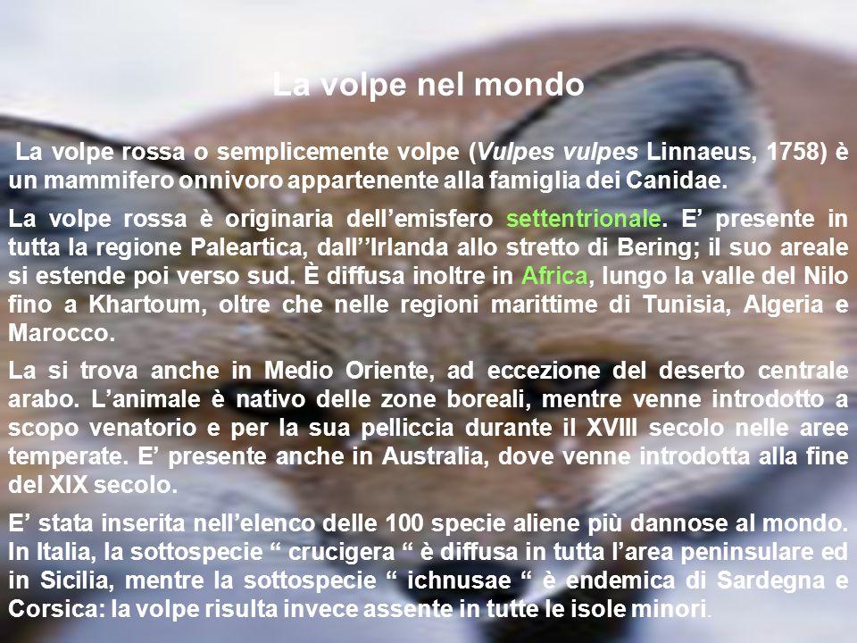 Regolamento Provinciale(Bari) relativo alla caccia in battuta alla volpe ART.1-Il Comitato di Gestione dellA.T.C.