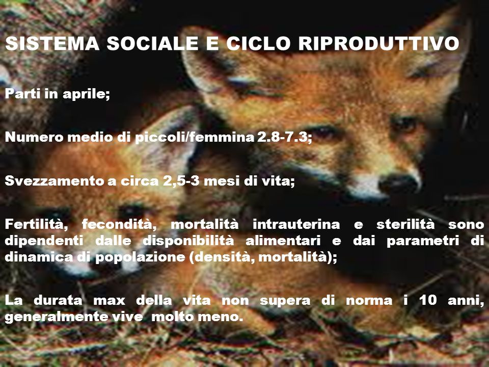 SISTEMA SOCIALE E CICLO RIPRODUTTIVO Parti in aprile; Numero medio di piccoli/femmina 2.8-7.3; Svezzamento a circa 2,5-3 mesi di vita; Fertilità, feco