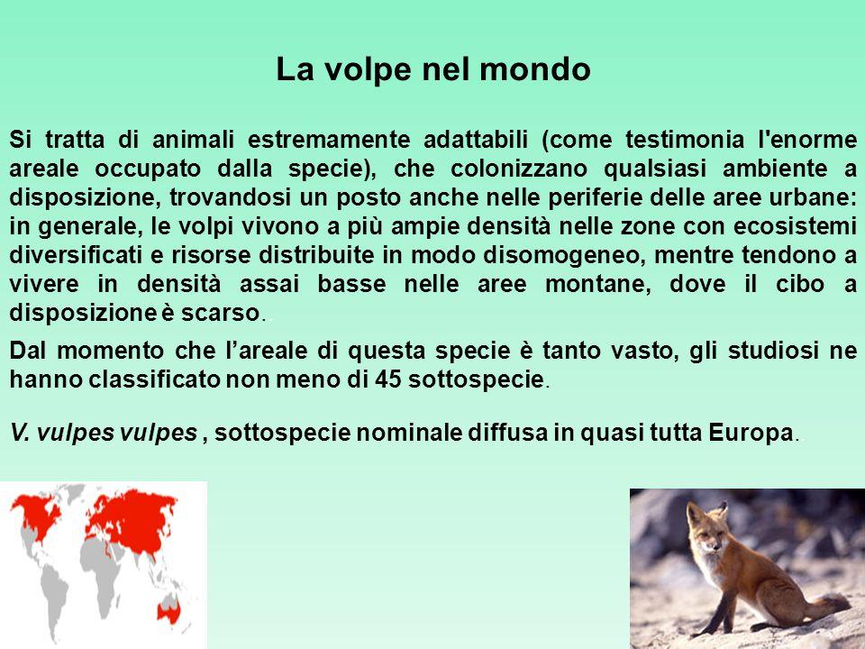 La volpe nel mondo Si tratta di animali estremamente adattabili (come testimonia l'enorme areale occupato dalla specie), che colonizzano qualsiasi amb