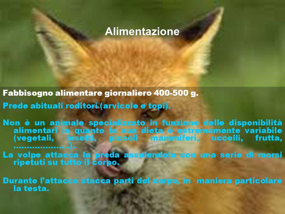 Alimentazione Fabbisogno alimentare giornaliero 400-500 g. Prede abituali roditori (arvicole e topi). Non è un animale specializzato in funzione delle