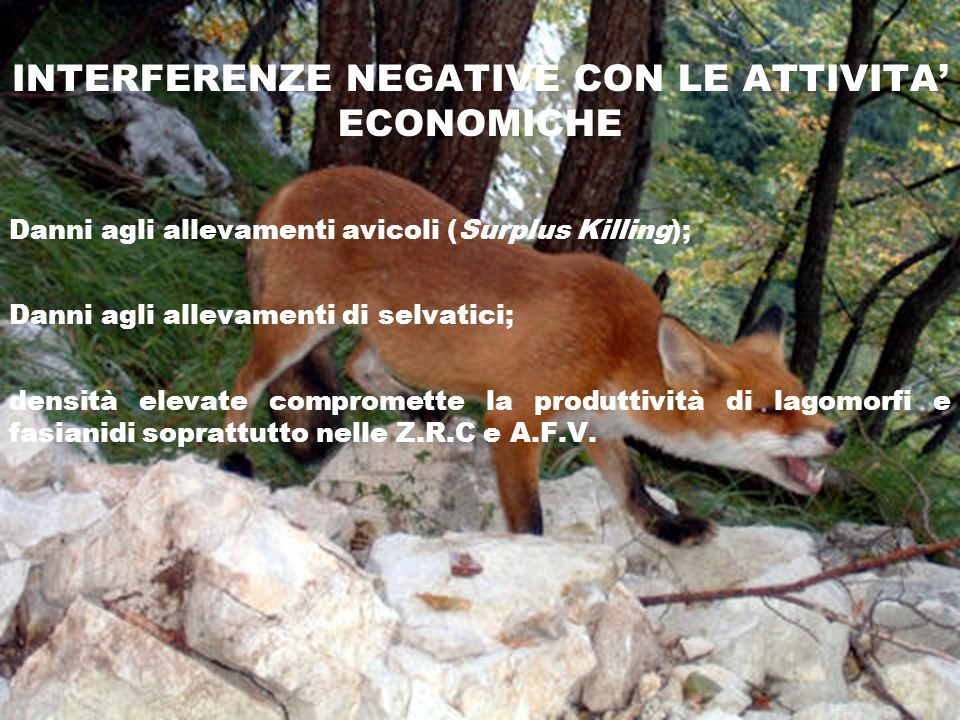 INTERFERENZE NEGATIVE CON LE ATTIVITA ECONOMICHE Danni agli allevamenti avicoli (Surplus Killing); Danni agli allevamenti di selvatici; densità elevat
