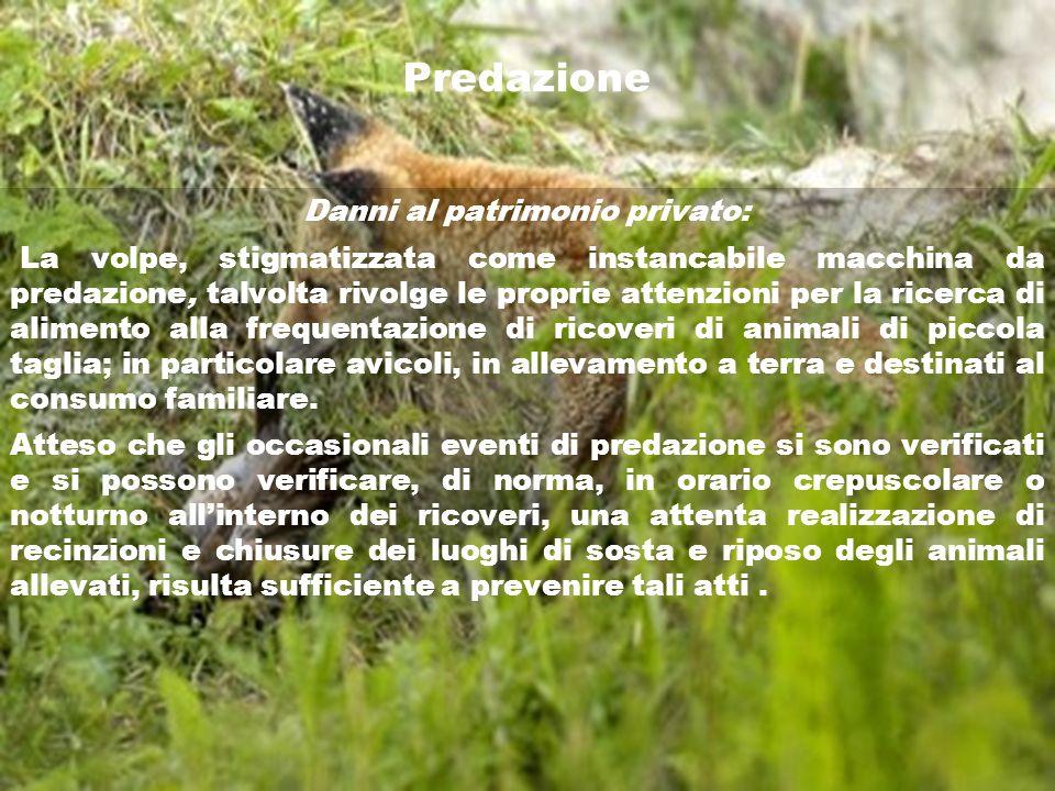Predazione Danni al patrimonio privato: La volpe, stigmatizzata come instancabile macchina da predazione, talvolta rivolge le proprie attenzioni per l