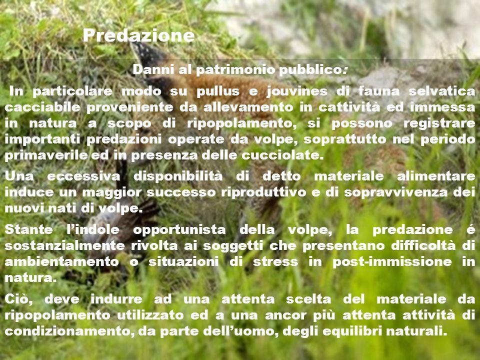 Predazione Danni al patrimonio pubblico: In particolare modo su pullus e jouvines di fauna selvatica cacciabile proveniente da allevamento in cattivit