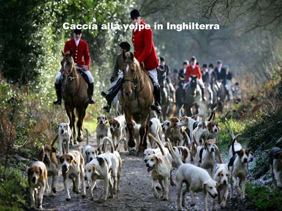 Caccia alla volpe in Inghilterra