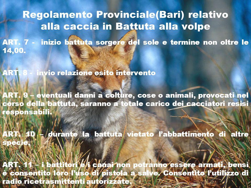 Regolamento Provinciale(Bari) relativo alla caccia in Battuta alla volpe ART. 7 - inizio battuta sorgere del sole e termine non oltre le 14,00. ART. 8