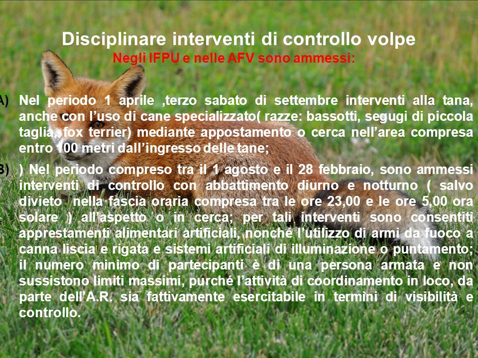 Disciplinare interventi di controllo volpe Negli IFPU e nelle AFV sono ammessi: A)Nel periodo 1 aprile,terzo sabato di settembre interventi alla tana,