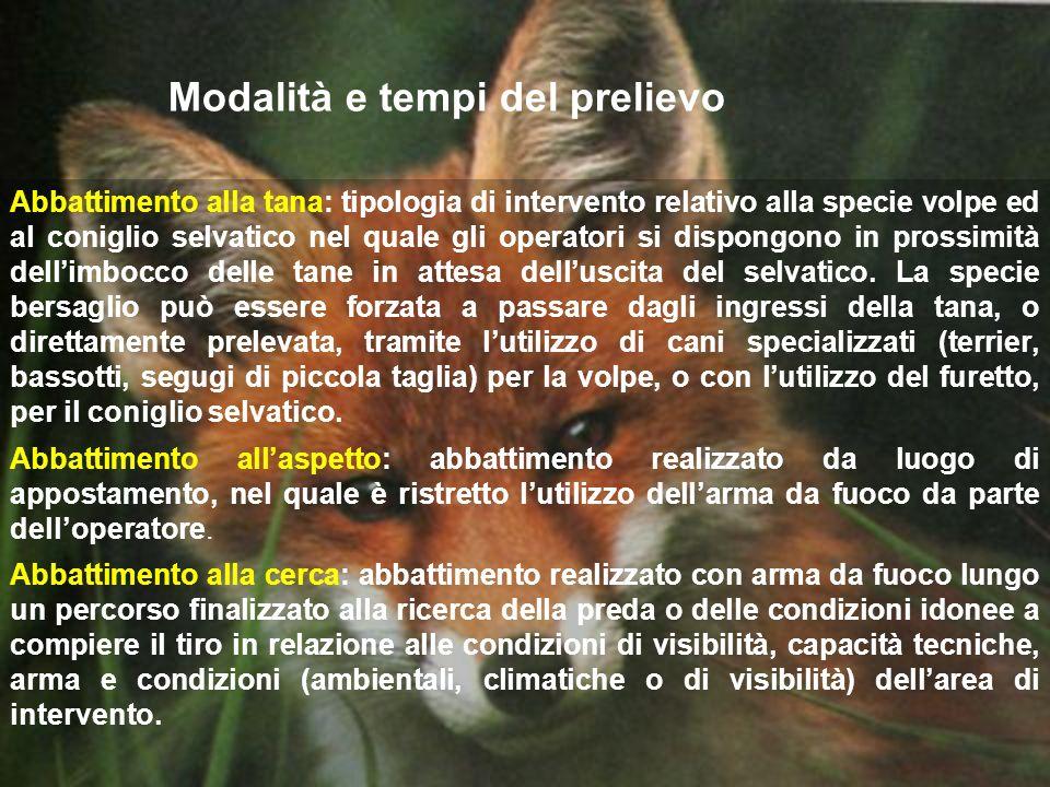 Modalità e tempi del prelievo Abbattimento alla tana: tipologia di intervento relativo alla specie volpe ed al coniglio selvatico nel quale gli operat