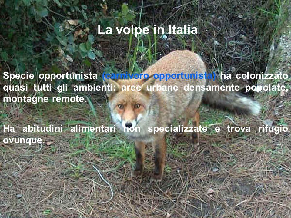 La volpe in Italia Specie opportunista (carnivoro opportunista) ha colonizzato quasi tutti gli ambienti: aree urbane densamente popolate, montagne rem